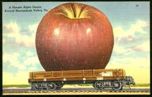 postcard--giant%20apple%202